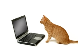 cat sitting looking at laptop